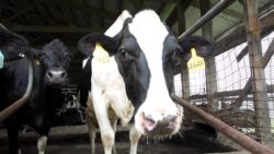 Sustainability in the Dairy Supply Chain