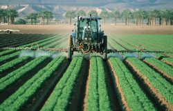 EPA Denies Petition to Ban Widely Used Pesticide