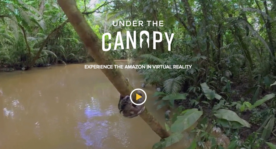 save the amazon rainforest essay Beauty endangered one of the largest forests in the world, encompassing nine nations and over 14 billion acres, the amazon rainforest stands as an amazing.
