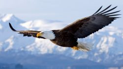 Endangered Species Act Runs Headfirst into Mining Companies