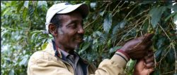 Without Sustainability, Coffee Roaster Says Industry Is At Risk