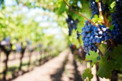 GE Turns Recycled Water into Wine (or rather Winery Process Water)