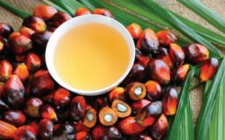 PepsiCo Now Traces 90% of Palm Oil Back to the Mill to Ensure Future Supply