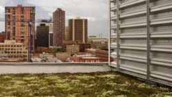 Denver Building Owners Could Be Required to Install Green Roofs