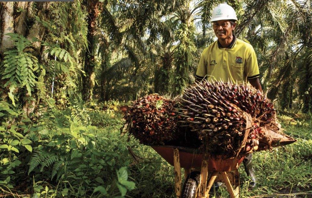 Investors Demand Better Standards for Sustainable Palm Oil ...